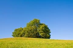Idyllische Wiese mit Baum Stockfotos