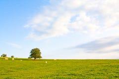 Idyllische Wiese mit Baum Lizenzfreies Stockbild