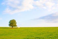 Idyllische Wiese mit Baum Stockbild