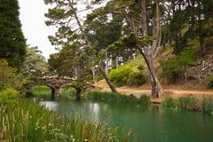 Idyllischer Golden Gate Park mit Brücke über See Stockfoto