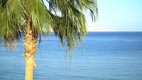 Idyllischer Hintergrund der Tropeninselferien Exotische sandiger Strand- und Palme auf Seeküste am sonnigen Tag mit blauem Himmel stock footage