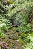 Idyllischer kleiner Wasserfall Stockbild