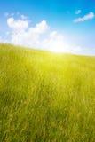Idyllischer Rasen mit Tageslicht Stockbild