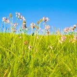 Idyllischer Rasen mit Tageslicht Stockfoto