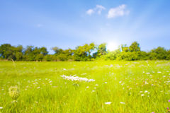Idyllischer Rasen mit Tageslicht Stockbilder
