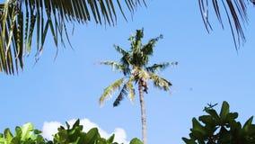 Idyllisk bakgrund för tropisk ösemester Exotiska sandiga palmträd och andra växter på den soliga dagen med blå himmel lager videofilmer