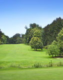 Idyllisk golfbana med skogen Royaltyfri Fotografi
