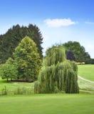 Idyllisk golfbana med skogen Royaltyfria Bilder