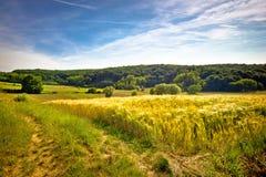 Idyllisk jordbruks- landskapsommarsikt Arkivbild
