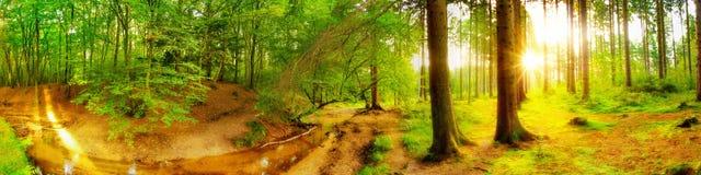 Idyllisk skog med bäcken royaltyfria foton