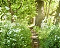 Idyllisk skogbana med vita blommor Royaltyfria Bilder