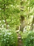 Idyllisk skogbana med vita blommor Arkivbild