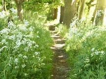Idyllisk skogbana med vita blommor Royaltyfri Fotografi