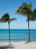 Idyllisk strandsikt av det azura havet som inramas med palmträd Arkivfoto