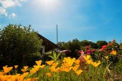 Idyllisk trädgård som framme förlägga i barack med Kalifornien vallmo arkivfoto