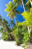 Idyllisk tropisk plats Arkivfoto