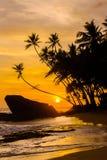 Idyllisk tropisk strand med konturer av palmträd Royaltyfri Fotografi
