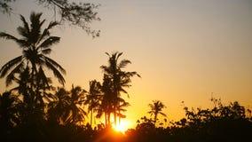 Idylliskt bakgrundsskott av den härliga ljusa gula solen som går upp bland palmträdkonturer på exotisk tropisk soluppgång arkivfilmer