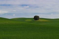 Idylliskt fält Arkivfoto