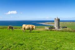 idylliskt irländskt landskap Arkivbilder