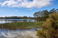 Idylliskt landskap av sjön och träd Arkivbilder