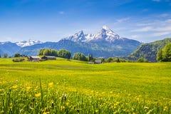 Idylliskt landskap i fjällängarna med gröna ängar och blommor royaltyfri fotografi