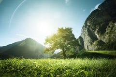 Idylliskt landskap i fjällängarna, trädet, gräset och bergen Royaltyfria Bilder