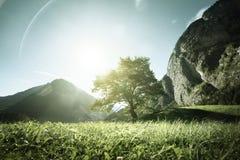 Idylliskt landskap i fjällängarna, trädet, gräset och bergen Arkivbilder