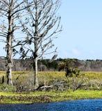 Idylliskt och Serene Story Book Setting av gamla tr?d som f?rbiser en sj?- och natursylt i Florida arkivfoton