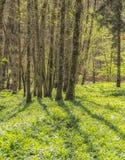 Idylliskt skoglandskap arkivfoto