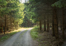 Idylliskt skogspår arkivbilder