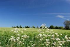 Idylliskt sommarlandskap UK Arkivfoton