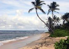 idylliskt tropiskt för strand Arkivbild