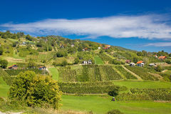 Idylliskt vingårdområde för grön kulle royaltyfri fotografi