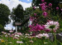 Idylllandschaft: Landhaus u. viel der Gänseblümchen Stockbild