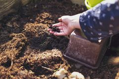 Iemand harkt ongeveer in de grond en bereidt de grond voor de tuin voor royalty-vrije stock afbeelding