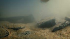Iemand neemt gouden ring van rivierbed op stock footage