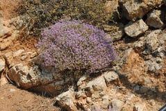 Ierapetra, Agios Nikolas, Creta, Grécia fotografia de stock