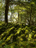 ierland Killarney nationaal park Stock Afbeelding