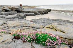 Iers Aran Islands Costal Scene royalty-vrije stock foto's