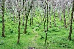 Iers bos, Provincie Wicklow, Ierland stock afbeelding