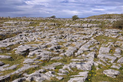Iers kalksteenlandschap Royalty-vrije Stock Fotografie