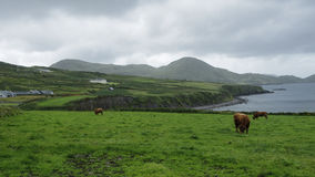 Iers kustlandschap Stock Fotografie