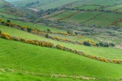 Iers platteland stock afbeelding