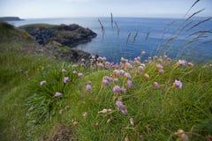 Ierse kust Stock Afbeeldingen