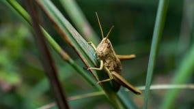 Iets in het gras Stock Foto's