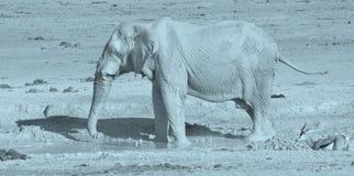 Iew di un elefante coperto in fango bianco Immagini Stock Libere da Diritti