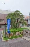 Ieyasu armor hang pine tree in Hamamatsu, Japan. Pine tree used to hang the armor of Tokugawa Ieyasu (Ieyasu yoroi-kake-matsu) in Hamamatsu, Shizuoka Prefecture Stock Photography