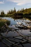 Iezer Lake Stock Photography