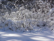 If the plant collect snow, it can protect against cold and frost. Sunny day in the winter forest. Trees calmly waiting for spring, carelessly basking in the rays stock photo